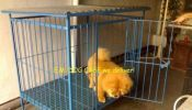 Dog Cage Brand New and Durable